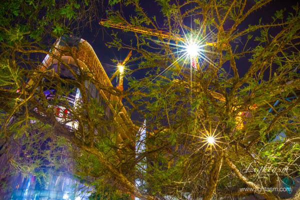 Construction lights through trees